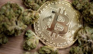 Wealth Manager: Pot Stocks Will Mimic Crypto Bubble – But Wont Crash Like Bitcoin