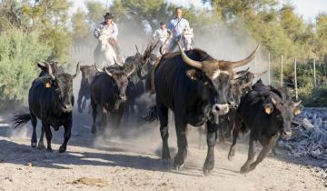 Altcoin season could bring in 1,100% gain if/when next bull run begins