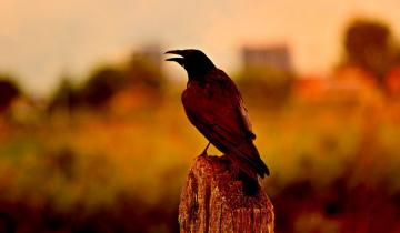 Binances Trust Wallet App Adds Ravencoin (RVN) Support