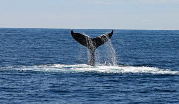 Mysterious Whale Buys 20,000 Ether on Crypto Exchange Binance