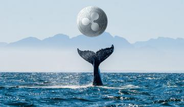 Ripple Whale: It Only Takes $20,000 To Become a XRP One-Percenter