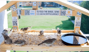Anonymous YouTuber Sets Up Live Cam To Feed Birds Via Crypto Donations