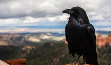 RavenCoin Looks Poised to Break Out - Price Analysis