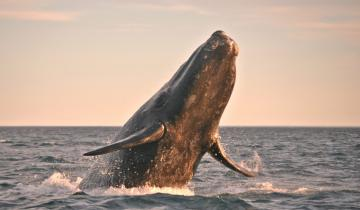 Bitcoin (BTC) Whale Just Moved $900M in Single Transaction