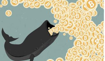 Bitcoin Whales Are on the Verge of Extinction: Crypto Watchdog