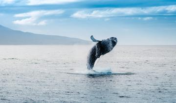 Bitcoin Whales Play Liquidation Games as Analysts Eye Buyer Activity at Key Support