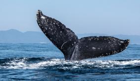 Crypto Whale Joe007 Criticizes Bullish Bitcoin Price Predictions