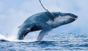 Ethereum is Becoming a Whale-Chain, A Serious Problem, Crypto Entrepreneur