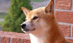 3 snippets to begin your day: Dogecoin revels in market interest, altseason chances and more