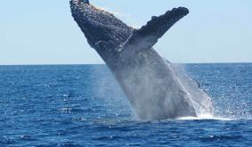 Bitcoin Whale Moves Massive $428 Million BTC Stash For Less Than $15