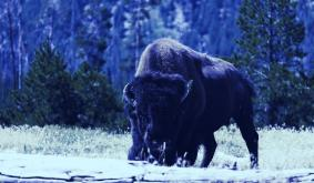 Crypto Exchange Coinbase Buying Bison Trails