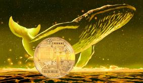 Crypto Whales Are Quietly Accumulating These Three Altcoins, According to Analytics Firm Santiment