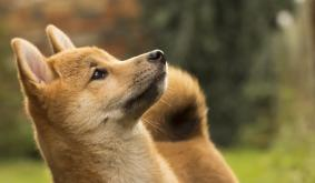 Decentralized Exchange Launches for Dogecoin Swaps