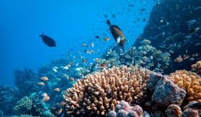 Alameda Research Pumps $20M Into Cross-Chain DeFi Platform Reef Finance