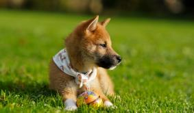 Anonymous Dogecoin Donor Pays Adoption Fees at Florida Dog Shelter