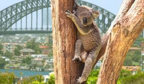 Australian Securities Exchange May Launch First Crypto ETF This Year: Report