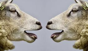 This Bitcoin bull on XRP supporters: They just dont look at the truth sometimes