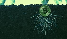 What Is Taproot, the Proposed Bitcoin Upgrade?