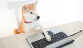 Dogecoin to Get DevOps Support for Commercial Apps Via DogeLabs.IO, AppSwarm