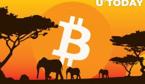 Bitcoin P2P Trading Volume in Africa Turns Largest in The World, Exceeding North America