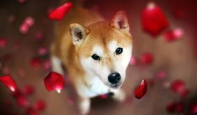 Dogecoin Rival Shiba Inu Spikes in Value While DOGE Prices Flounder, SHIB Jumps 21% in 24 Hours