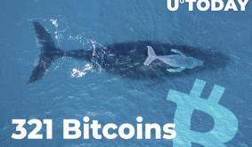Whale Grabs 321 Bitcoins, While BTC Is Dropping, Holds 111,794 BTC in Total