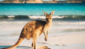 Crypto Companies in Australia Get Shunned By Banks